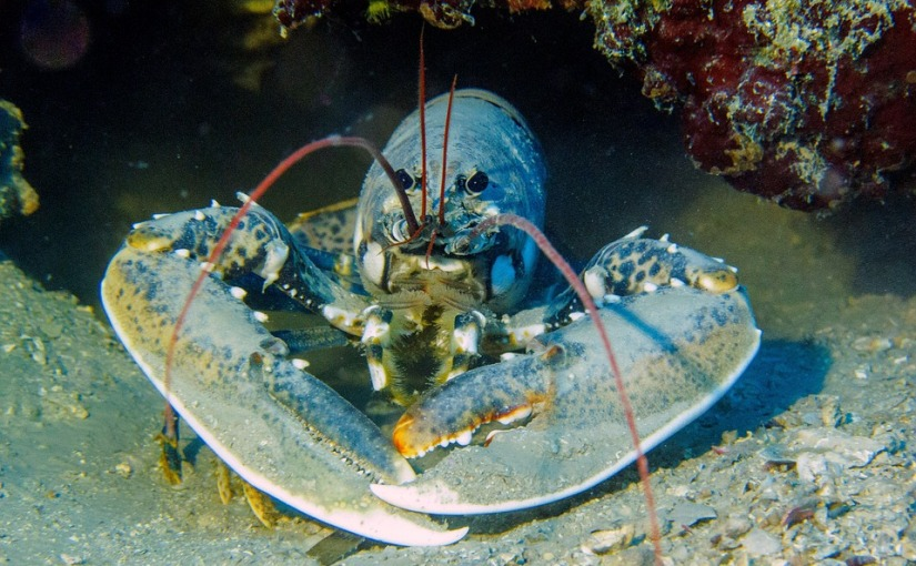 What can we learn from a lobster?